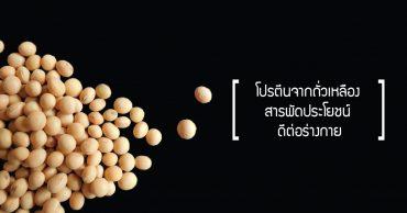 โปรตีนจากถั่วเหลือง, รับผลิตอาหารเสริม , โรงงานรับผลิตอาหารเสริม ,รับผลิตอาหารเสริม วิณพา
