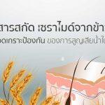 สารสกัด เซราไมด์ จากข้าวสุดยอดเกราะป้องกันของการสูญเสียน้ำในชั้นผิว
