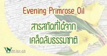 Evening Primrose Oil สารสกัดที่ได้จากเคล็ดลับธรรมชาติ