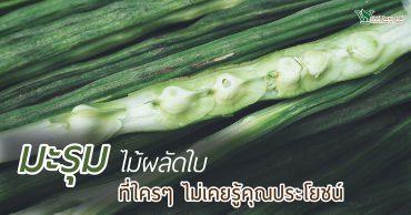 มะรุม,ประโยชน์ของมะรุม,สรรพคุณของมะรุม,มะรุมกินแล้วดียังไง