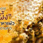 นมผึ้ง,ประโยชน์ของนมผึ้ง,สรรพคุณของนมผึ้ง,นมผึ้งกับความงาม